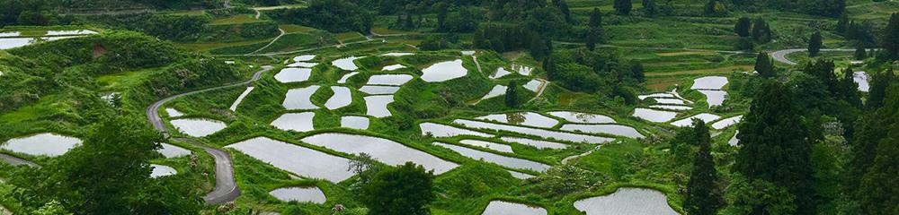 新潟の農業の未来